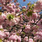 春の金沢観光から学べる、ホームページ作成とは?