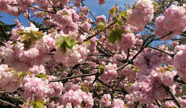 春の金沢観光から、学べることとは?